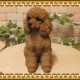 ◇お部屋のインテリアにお庭のオーナメントとしても♪ リアルな犬の置物 プードル Bタイプ 子犬 お座りタイプ  子犬のフィギア