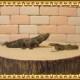 リアルな ワニ 蛇の置物 ワニ アナコンダ 2点セット 爬虫類 ドール フィギュア ガーデニング ヘビ わに ミニチュア インテリア