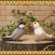 リアルな鳥のぬいぐるみ ブンチョウ 2羽セット トリの置物 文鳥のオブジェ インテリア フィギュア