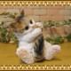 猫の置物 シッポかじかじキャット ミケ ねこオブジェ レジン製 ネコフィギュア インテリア ガーデニング素材