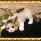 猫の置物 ベビーキャット監視中 ミケ ねこオブジェ レジン製 ネコフィギュア インテリア ガーデニング素材