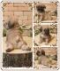 犬の置物 パグ 子いぬ 休憩中! ガーデン オーナメント 装飾 ベランダアート イヌオブジェ フィギュア ガーデニング 玄関先