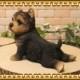 犬の置物 ヨークシャーテリア 子いぬ ヨーキー 休憩中! ガーデン オーナメント 装飾 ベランダアート イヌオブジェ フィギュア ガーデニング 玄関先