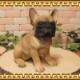 ◇お部屋のインテリアにお庭のオーナメントとしても♪ リアルな犬の置物 フレンチブルドッグ 成犬  お座り イヌのフィギア