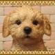◇お部屋のインテリアにお庭のオーナメントとしても♪ リアルな犬の置物 プードル Aタイプ  子犬のフィギア