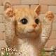 リアルなネコの置物 お願いキャット 3 チャトラ ねこのフィギュア 猫オブジェ◇お部屋のインテリアにお庭のオーナメントとしても♪