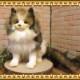 大きくてリアルな動物のぬいぐるみ ノルウェージャンフォレストキャット 猫の置物 ネコのオブジェ インテリア フィギュア