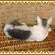 リアルなねこの置物 寝そべりキャット ビッグサイズ ホワイト&グレー◇猫のオブジェ ネコモチーフ フィギュア お部屋のインテリアにガーデニングの素材に