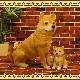 犬の置物 柴犬 成犬 お座り ビッグサイズ  大きくてリアルなイヌの置物 ドッグオブジェ 庭 ガーデニング  玄関先