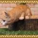 猫の置物 キャット監視中! チャトラ ねこオブジェ レジン製 ネコフィギュア インテリア ガーデニング素材