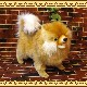 ◇大きくてリアルな犬のぬいぐるみ ポメラニアン ドッグオブジェ いぬの置物 イヌのフィギュア インテリア