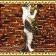 大きくてリアルなネコの置物 スタンドキャット ホワイト&グレー ねこのフィギュア 猫オブジェ お部屋のインテリアにお庭のオーナメントとしても