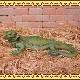 リアルなトカゲの置物 イグアナ グリーンカラー 爬虫類 フィギュア ガーデニング オーナメント インテリア 玄関先