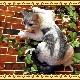 大きくてリアルなネコの置物 キャット 伏せ Aタイプ ホワイト&グレー ねこのフィギュア 猫オブジェ お部屋のインテリアにお庭のオーナメントとしても