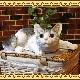 大きくてリアルなネコの置物 キャット 伏せ Bタイプ ホワイト&グレー ねこのフィギュア 猫オブジェ お部屋のインテリアにお庭のオーナメントとしても