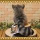 猫の置物 リアルな 仔 マヌルネコ ぬいぐるみ キャット 猫の置物 ネコのオブジェ インテリア フィギュア