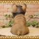 リアルな犬の置物 フレンチブルドッグ ダンディードッグ ◇お部屋のインテリアにお庭のオーナメントとしても♪◇イヌオブジェ フィギュア ガーデニング 玄関先