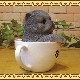 リアルなネコの置物 ペルシャ ティーカップ・キャット 子ねこのフィギア ガーデニング 猫のオブジェ 玄関先