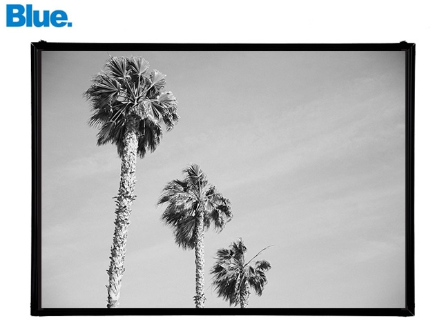 Blue.オリジナル Photo&Frame 「Palm Tree 1」 Sサイズ
