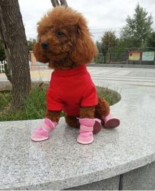 犬用ブーツ ドッグ靴 ブーツ  靴  シンプル ペット用品 犬用 かわいい犬 子犬 首輪 ペット用 シューズ 和風 ペット用品 散歩用 柔らかい【ジャパンストルツ 】
