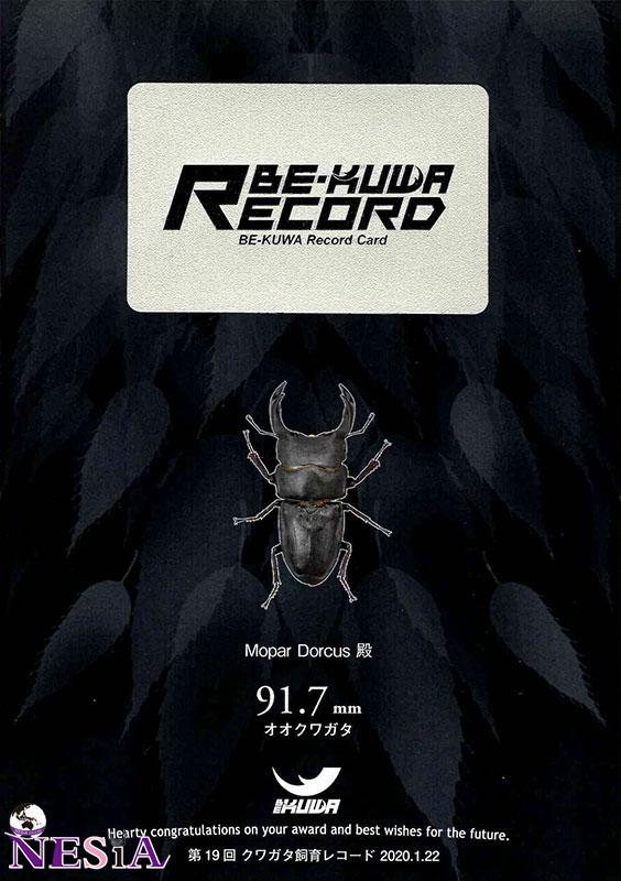 【ブリード応援セール】RECORD血統『MDR917』国産オオクワガタ【♂84mm♀54mm】