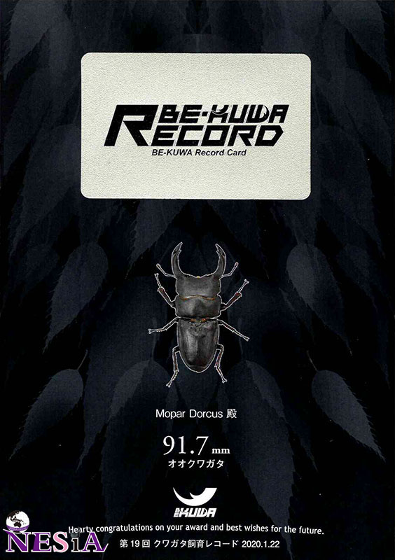 【幼虫】RECORD血統『MDR917』国産オオクワガタ【菌糸カップ付き】