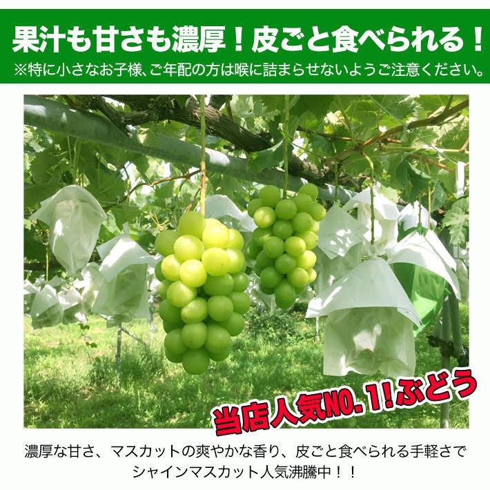 【フルプロ農園】シャインマスカット 家庭用約1kg 2房分