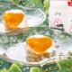 【夏ギフト】茂木ビワゼリー 15個箱入