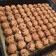 [レストランコア特製]ピーナッツバターとチョコレートのクッキー 6個(卵・乳製品不使用)【冷蔵】