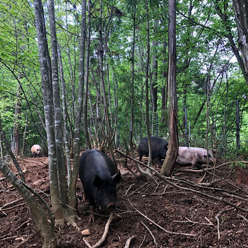 <SALE>[自然農園ウレシパモシリ]豚肉もも角切り 200g【冷凍】【10%OFF】