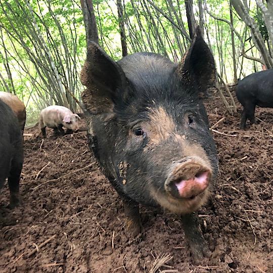 [自然農園ウレシパモシリ]豚肉ロース切り身(0.5cm厚×2枚)200g【冷凍】