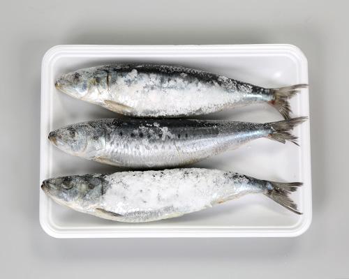北海道産塩いわし(特大・1尾150g以上)