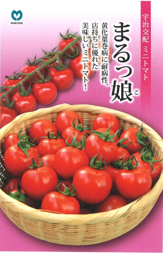 丸種 ミニトマト 「まるっ娘」のタネ 約10粒
