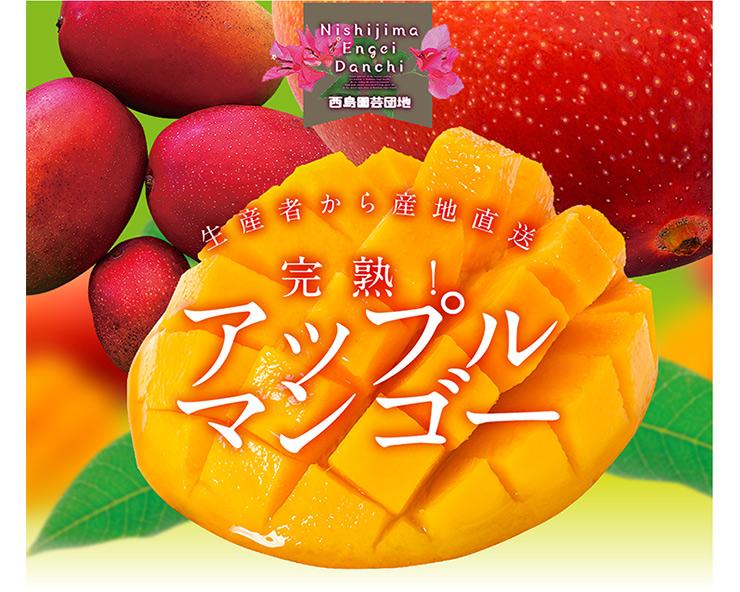 桐箱入りアップルマンゴー