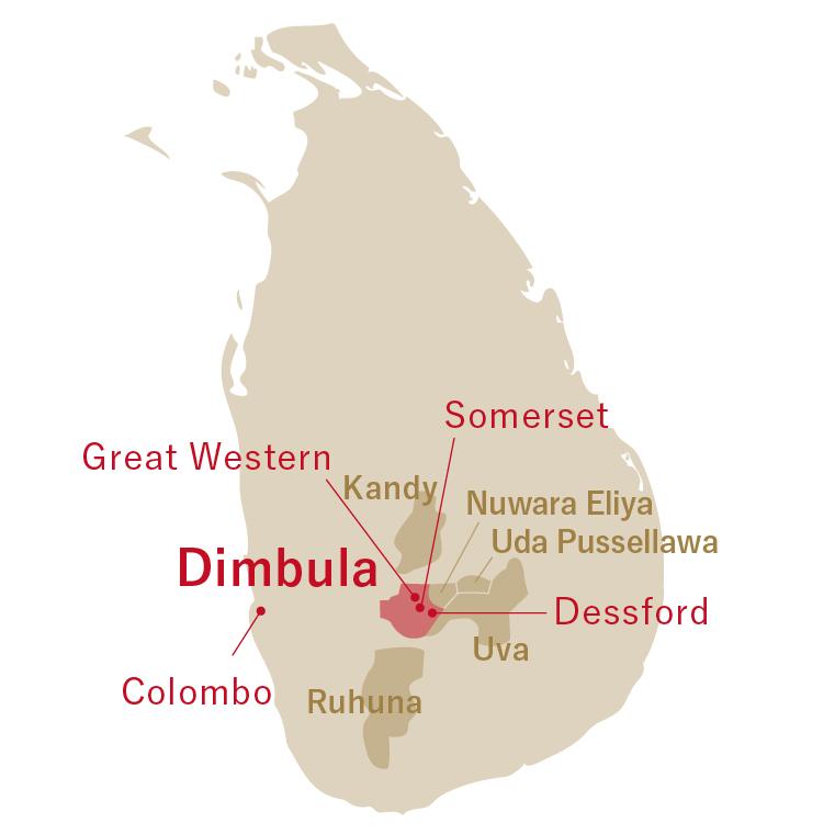 Sri Lanka Dimbula Assort 2021