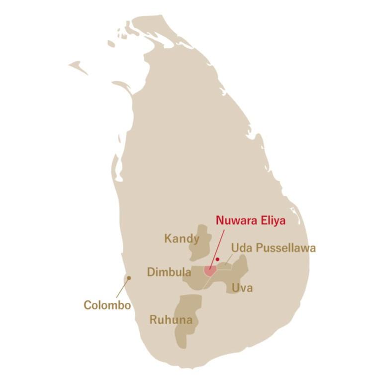 Sri Lanka Nuwara Eliya Pedro 2021 (お試し) 【ネコポス対応商品】