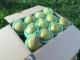 【2021年収穫分 予約受付中】ラフランス(西洋ナシ)/シナノスイート(りんご)詰合せ 3kgセット