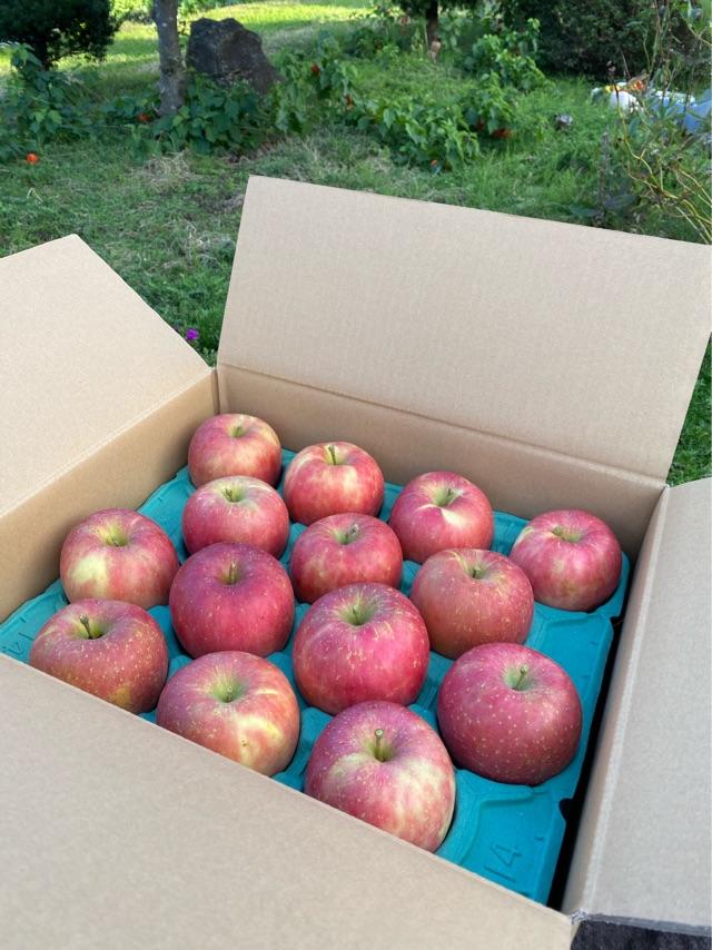 【三種町産品】安藤農園 りんご ふじ5kg