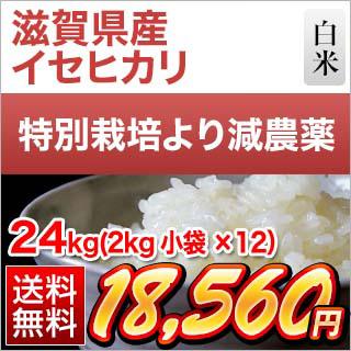 令和元年 (2019年) 滋賀県産 イセヒカリ 24kg(2kg×12袋)【減農薬】【送料無料】【白米・玄米 選択】