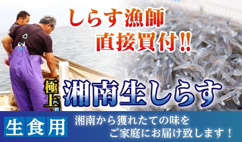【小田原魚河岸でん】 湘南生しらす100g(冷凍)