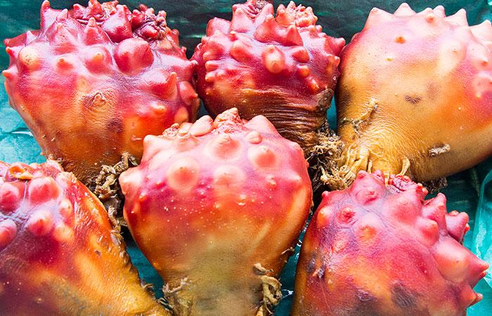 ホヤの醤油麹煮 魚市場キッチン缶詰シリーズ 防災備蓄食品にも