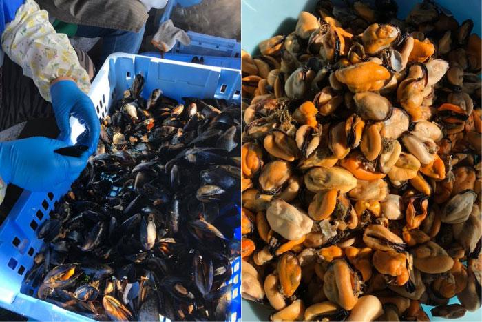 ムール貝のアヒージョ|魚市場キッチン缶詰シリーズ|防災備蓄食品にも