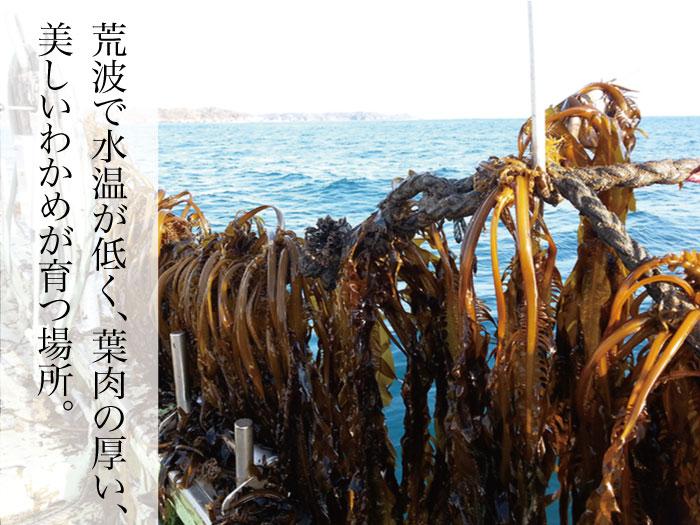 大容量|三陸外洋歌津産塩蔵わかめ、芯付きわかめ、茎わかめ、計15袋セット(送料無料)