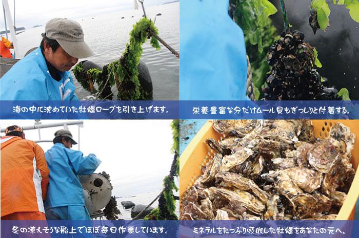森と海が育む宮城県南三陸産殻付き牡蠣3kgLサイズ(18個前後)