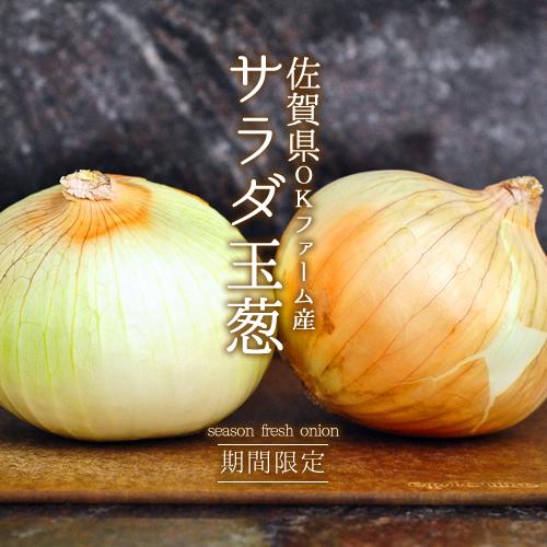【期間限定 新たまねぎ 】  佐賀県産サラダ玉ねぎ 基里OKファームの新玉ねぎ