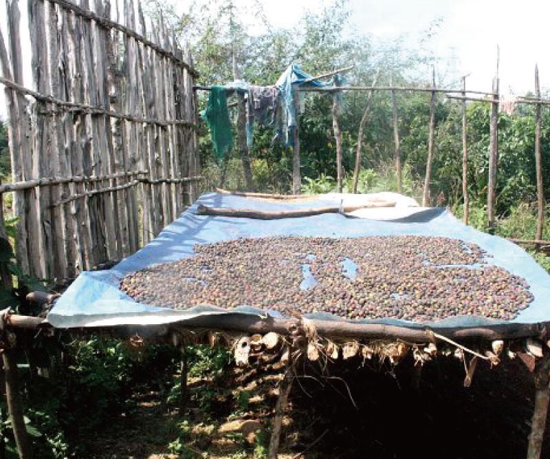 森に眠る幻のコーヒー200g(粉タイプ)