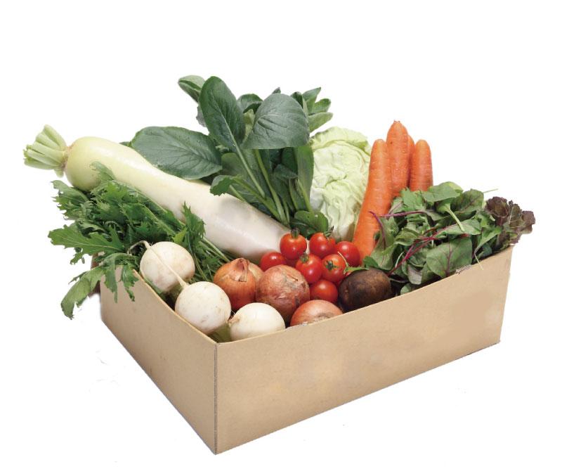季節の旬野菜セット(特別栽培:無農薬・無化学肥料)