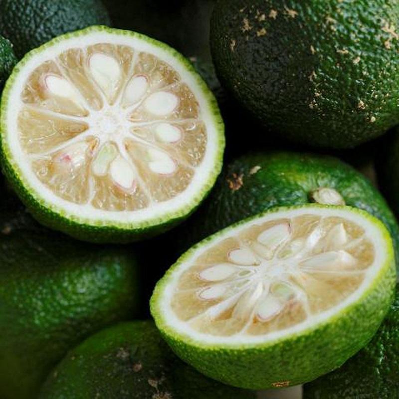 農薬・化学肥料不使用栽培の木頭柚子(青ゆず) 5kg(約60個)