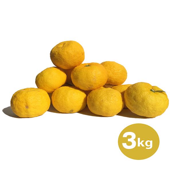 農薬不使用 木頭ゆず(黄玉) 3kg (約30個)