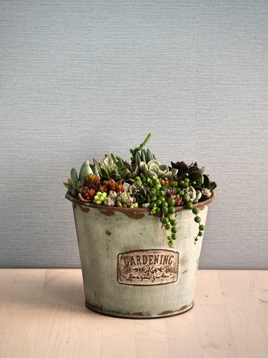 多肉植物の寄せ植えM